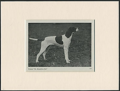 POINTER OLD 1940'S NAMED CHAMPION DOG PRINT MOUNTED READY TO FRAME