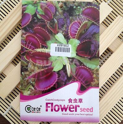 So Cool! New 40Pcs/Bag Carnivorous VENUS Fly Trap Seeds + Care Instructions EWUK