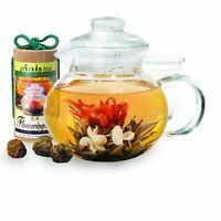 Primula 40-ounce Glass Teapot With Infuser And Lid With 12 Flowering Teas In A C on sale