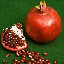 """Pomegranate """"Sharp Velvet"""" 10 Finest Seeds"""