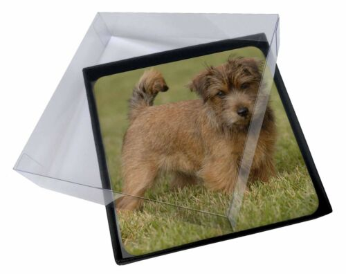 4x Norfolk Terrier Dog Picture Table Coasters Set in Gift Box, ADNT1C