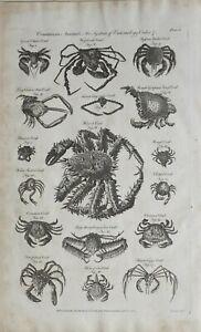 1790-Datierter-Aufdruck-Crustaceous-Tiere-mit-Entomologie-Weymouth-Krabbe-Common