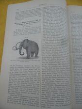 1896 Sibirien Mammuth Teil 1