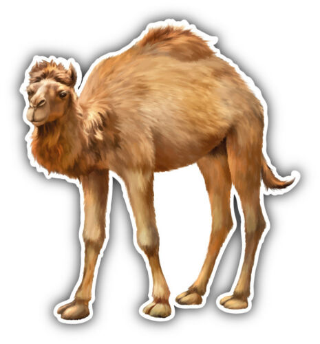 3/'/' or 5/'/' Camel Animal Car Bumper Sticker Decal