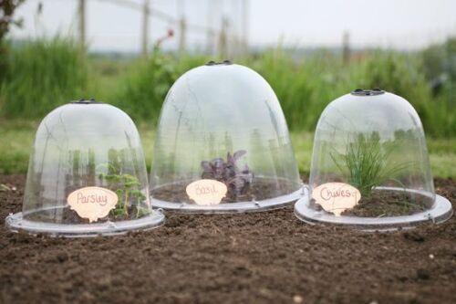 Original Victorian Bell Cloche x 3 Garden Crop Plant Veg Frost Protection