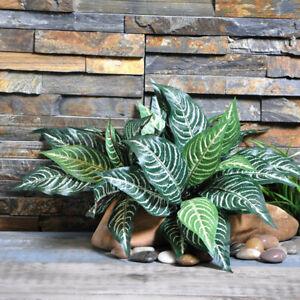 1Pc-Zebra-Leaf-Artificial-Plants-Fake-Green-Leaf-Tree-Plant-Home-Garden-Decor
