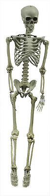 HALLOWEEN 5 FT LIFE SIZE HANGING SKELETON SKULL PROP DECORATION  FULL SIZE