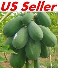 30 PCS Papaya Seeds E19, TR HOVEY Carica L. Caricaceae, Fruit Tree Seeds