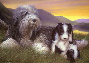 Nigel-Hemming-SHEPHERD-039-S-DELIGHT-Bearded-Collie-Mother-amp-Litter-Beardies-Cute