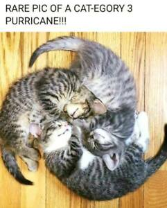 "Funny Cat  refrigerator magnet 2 1//2 x 3 1//2 /"""
