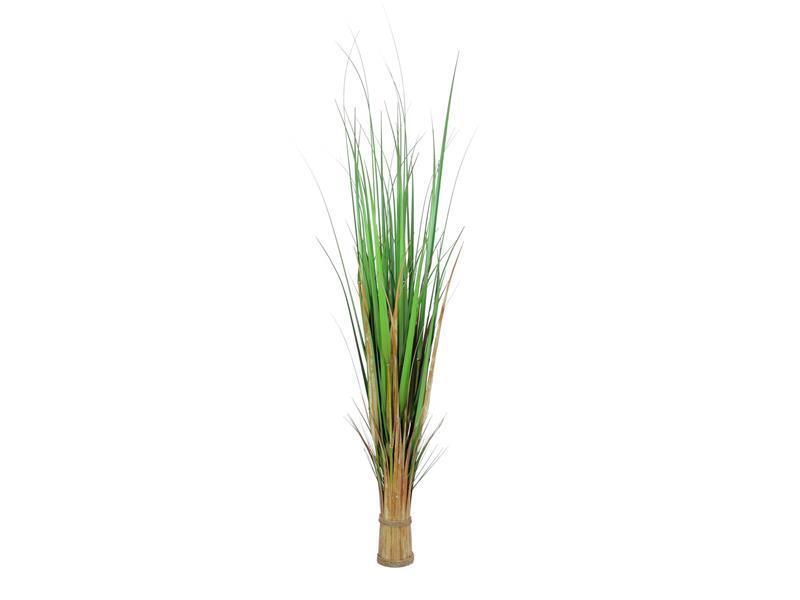 EUROPALMS Volpe erba, 150cm-Arte 150cm-Arte 150cm-Arte Pianta df04e0
