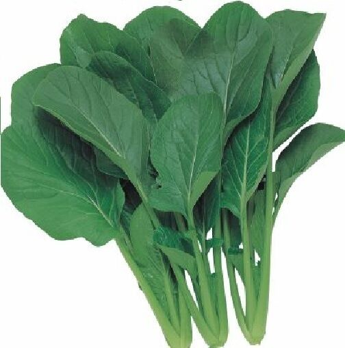 Vegetable - Komatsuna - Japanese Green Boy  - 400 Seeds