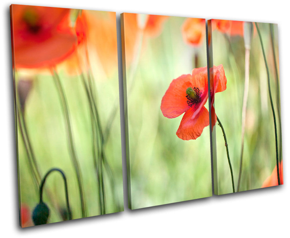 Poppy Field Flowers Floral TREBLE TELA TELA TELA parete arte foto stampa 42e33d