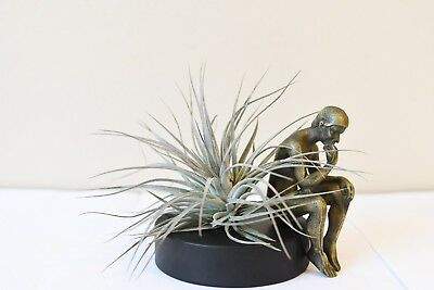 Thinker Man,special Plant Gift,home Decor,promotion,only 5 Left,usa Free Shiping A Complete Range Of Specifications Art