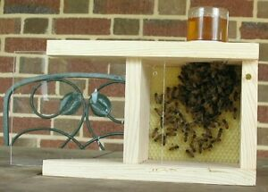 BEE-BUDDY-with-PsuedoQueen-A-small-hive-for-your-house-or-garden