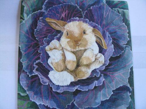 süßer kleine Hase im Kohl 3  Servietten Babs the Bunny