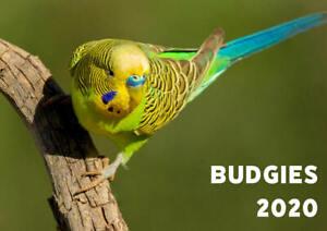 2020-Budgie-Calendar
