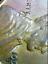 1957-D-PCGS-AU58-Obv-Planchet-Lam-Mint-ERR-RicksCafeAmerican-com thumbnail 3