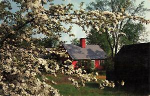 Postcard-Blossoms