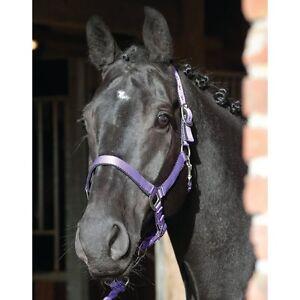 ELDORADO-Nylonhalfter-Lea-lila-Pony-Ponyhalfter-Halfter-aus-Nylon-fuer-Ponys