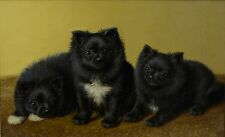 Fine Antique 19th Century Pomeranian Dogs Oil On Canvas Painting COULDERY