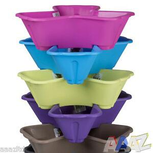Plastic 3 plants flower pots pot holder coloured herb for Vasi erba