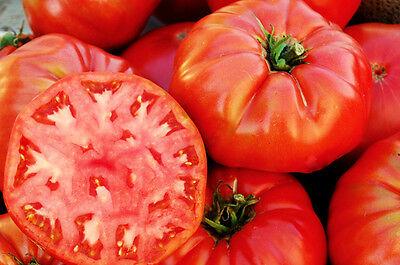 Heirloom Tomato Seeds Unique Taste 10,000ct 1 oz Cherokee Purple Tomato Seeds