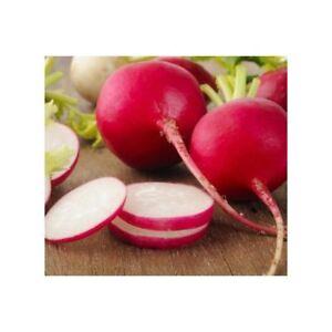Radieschen Radies Watermelon 50 Seeds Watermelon Radish Radish Red Meat