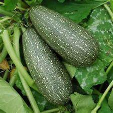 25 ZUCCHINI GRAY Seeds Tender Early Grey Squash Heirloom Organic No GMO RARE