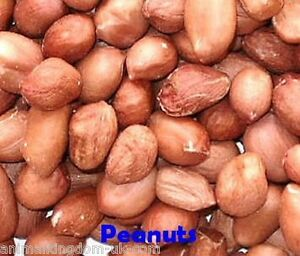 Grade 1 Peanuts for Wild Birds Aflatoxin Tested Safe for Birds 25kg