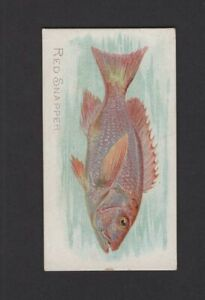 1889-Allen-amp-Ginter-N8-50-Fish-from-American-Waters-Red-Snapper