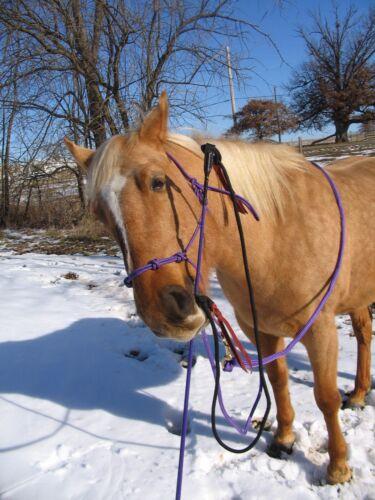 THOMEY HORSE TRAINING SET~ HALTER /& HANDY STICK FITS PARELLI CA REIS P LEAD