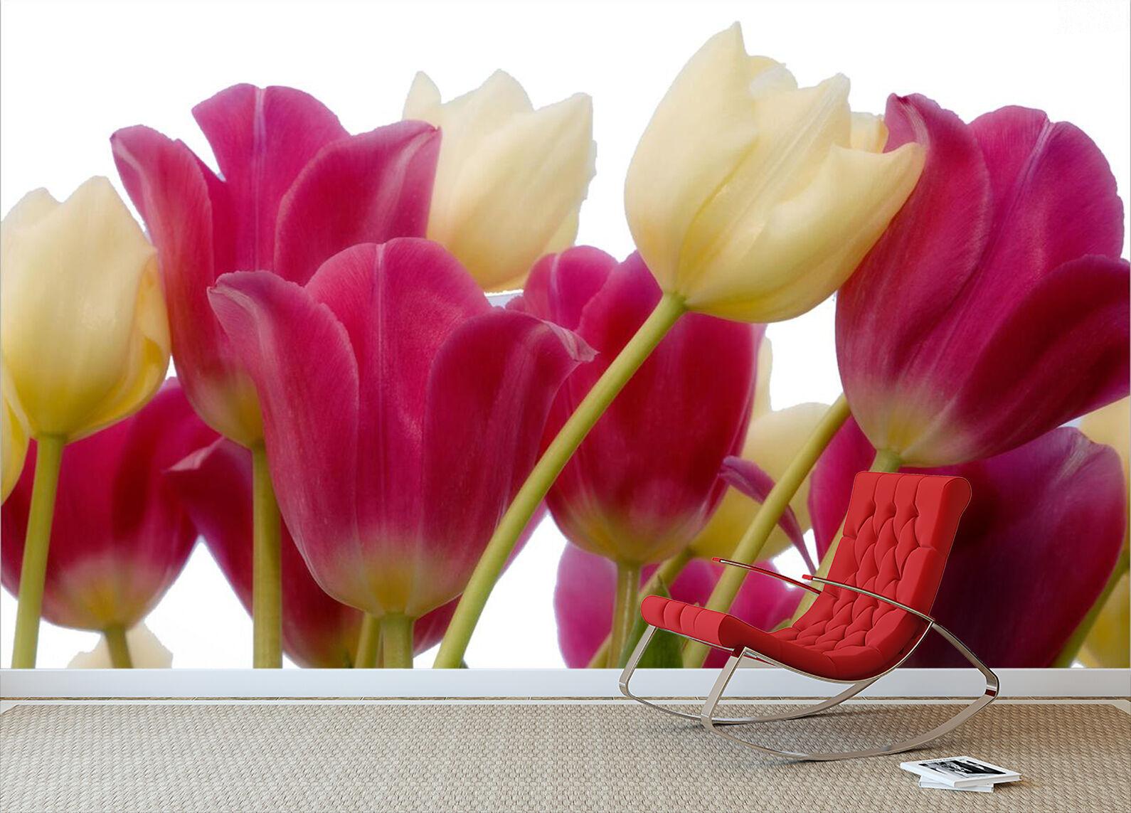 3D Fresh Tulip Plants Art 2207 Wall Paper Wall Print Decal Wall AJ WALLPAPER CA