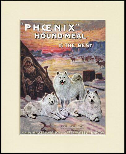 SAMOYED GREAT DOG FOOD ADVERT PRINT MOUNTED READY TO FRAME