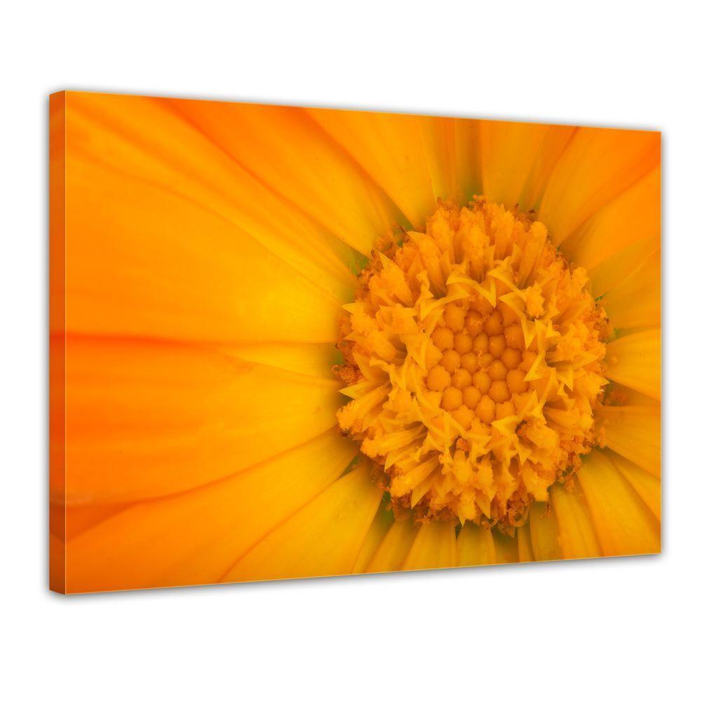 Tela-fiore giallo giallo giallo 5790fa