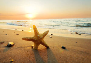 Sand Beach Sunset Starfish 3D Full Wall Mural