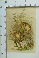 Victorian Trade Card Anthropomorphic Frogs Playing Leap-Frog Pond Scene F64