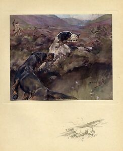 GROUSE-HUNTING-WITH-DOGS-1909-ANTIQUE-COLOR-PRINT-GROUSE-HUNT-POINTER-DOGS