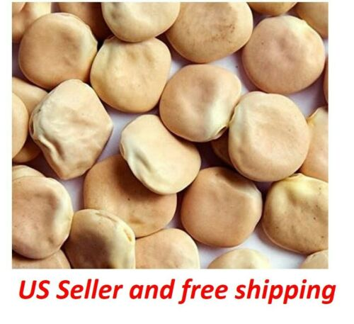 """– US Seller and Fre Lupini Beans Seed /""""SWEET LUPINI/"""" Lupinus albus 100 Seeds"""