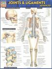 Joints & Ligaments Advanced 9781423224181 by BarCharts Inc Poster