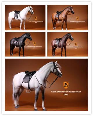 "Mr.Z 001~005 1//6 Germany Hanoverian Animal Hannover Horse Model F 12/"" Figure"