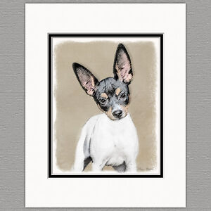 Rat-Terrier-Dog-Original-Art-Print-8x10-Matted-to-11x14