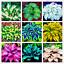 thumbnail 1 - Hosta-100-PCS-Seeds-Plants-Bonsai-Flower-Easy-To-Grow-Home-Garden-NEW-2021-Hosta