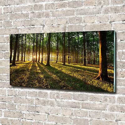 Wandbild aus Plexiglas® Druck auf Acryl 140x70 Landschaften Wald in der Sonne