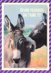 Carte Postale Âne