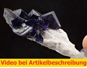 6874-Azurit-Milpillas-auf-weisser-Matrix-ca-2-5-5-2-cm-Sonora-Mexiko-MOVIE