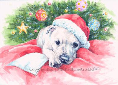 Border Terrier /'A Christma Star/' Christmas cards pack of 10 by Paul Doyle C555X