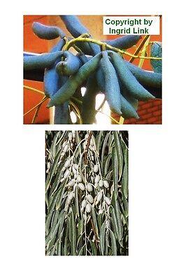 Due Giardino-alieni: La Deliziosa Blu Cetriolo E La Bella ölweide.-mostra Il Titolo Originale Con Le Attrezzature E Le Tecniche Più Aggiornate