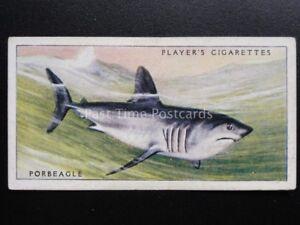 Num-1-porbeagle-SHARK-Mar-Peces-John-Player-amp-Sons-1935