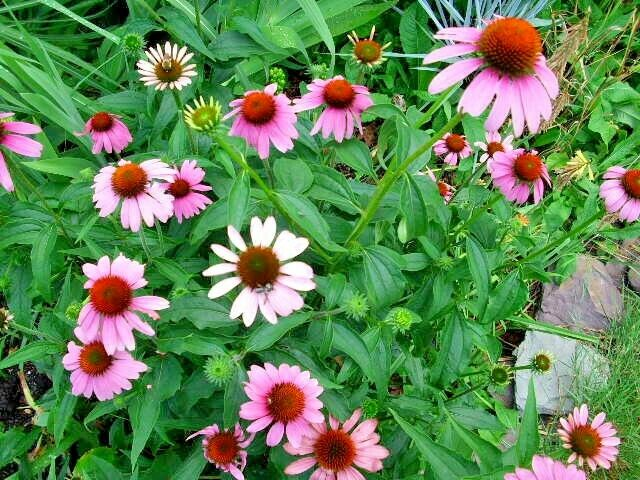The 5-Second Trick For How To Save Coneflower Seeds